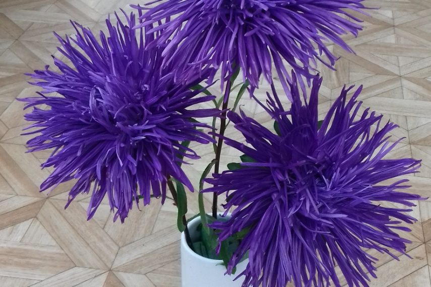 180093Asters1634031712