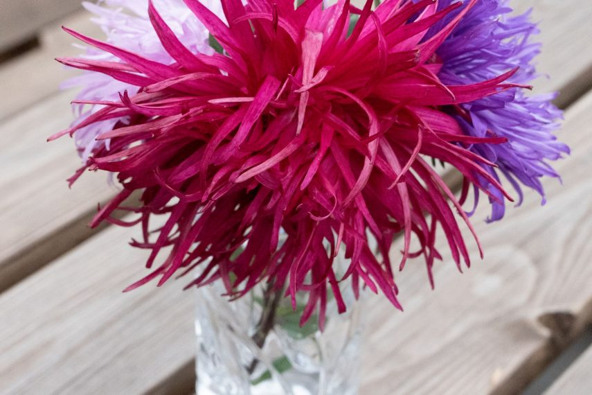 18583asters1634031811