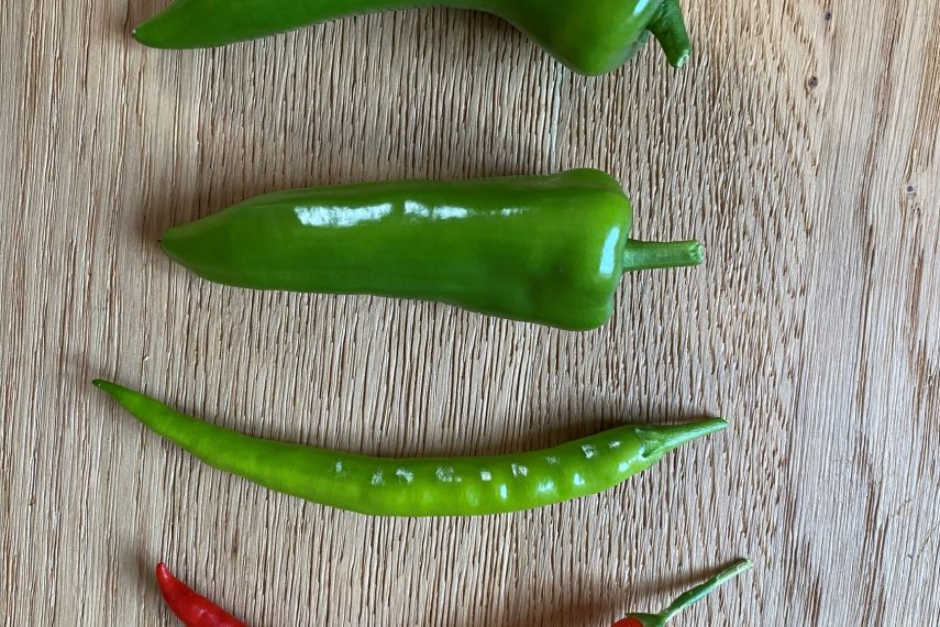 55654chillipeppers1634204402