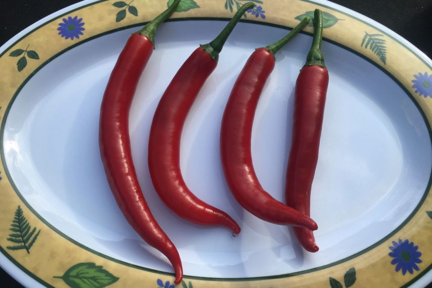 55664peppers1634204525